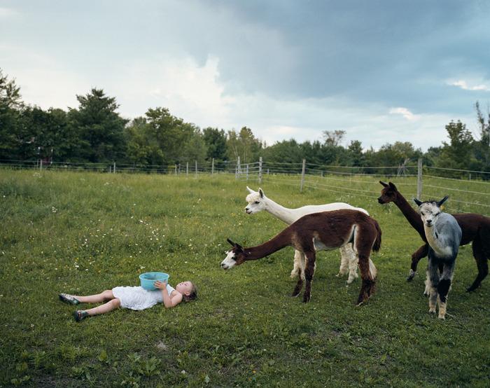 Amelia and the Animals / Robin Schwartz